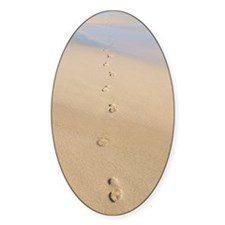 Footprints in sand Decal