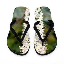 Foxtail lilies (Eremurus 'Joanna') Flip Flops