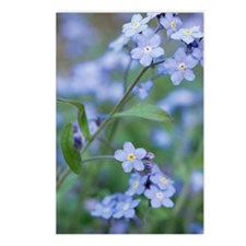 Forget-me-nots (Myosotis  Postcards (Package of 8)