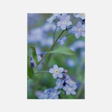 Forget-me-nots (Myosotis sylvatic Rectangle Magnet