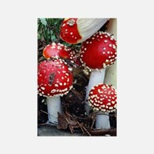 Fly agaric fungi Rectangle Magnet