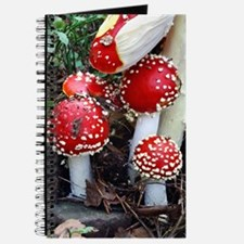 Fly agaric fungi Journal