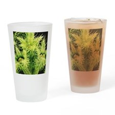 Flowers, SEM Drinking Glass