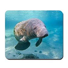 Florida manatee swimming Mousepad