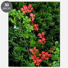 Flame flowers (Tropaeolum speciosum) Puzzle