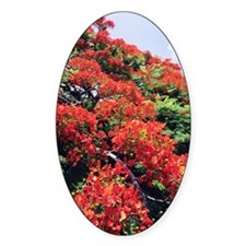 Flamboyant tree Decal