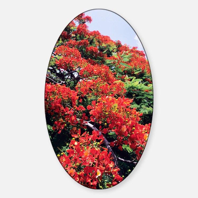 Flamboyant tree Decal