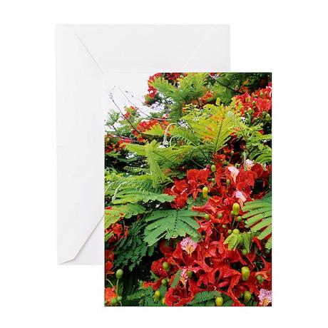 Flamboyant tree Greeting Card