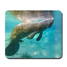 Florida manatee swimming Mousepad