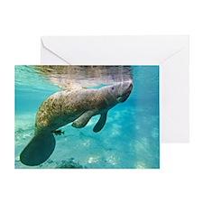 Florida manatee swimming Greeting Card