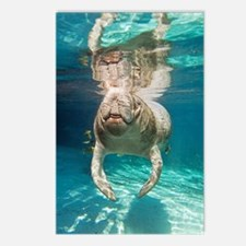 Florida manatee swimming Postcards (Package of 8)