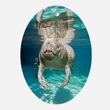 Florida manatee swimming Oval Ornament