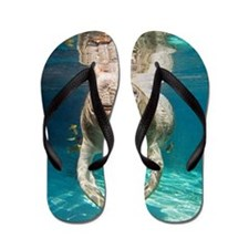Florida manatee swimming Flip Flops