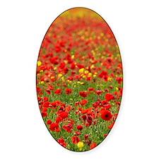 Field Poppy (Papaver rhoeas) Decal