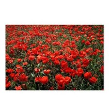 Field of red poppies Postcards (Package of 8)