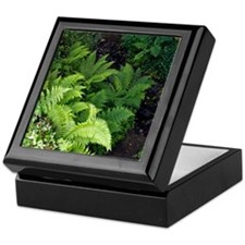 Ferns by a stream Keepsake Box
