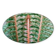 Fern fronds Decal
