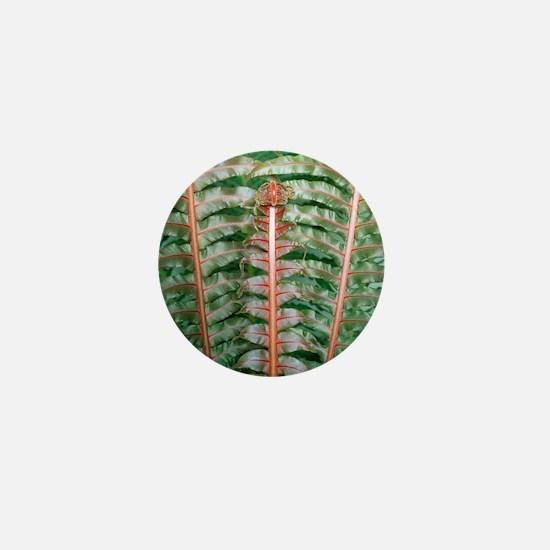 Fern fronds Mini Button