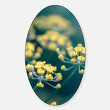 Fennel flowers Decal