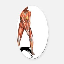 Female muscles, artwork Oval Car Magnet