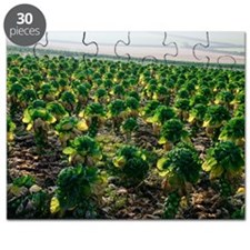 Field of Brussels sprouts Puzzle