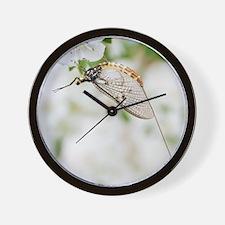 Female mayfly Wall Clock