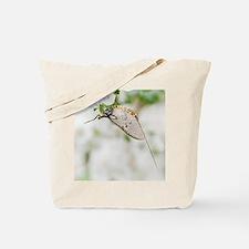 Female mayfly Tote Bag
