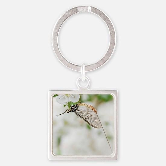 Female mayfly Square Keychain