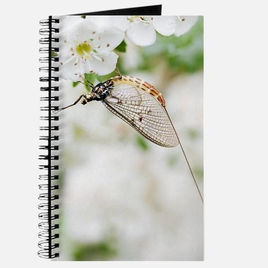 Female mayfly Journal