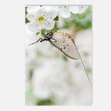 Female mayfly Postcards (Package of 8)