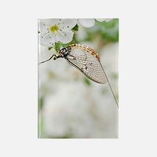 Female mayfly Rectangle Magnet
