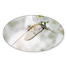 Female mayfly Decal