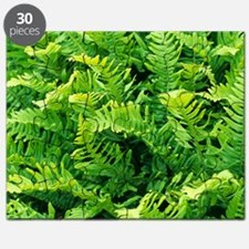 Fern leaves Puzzle
