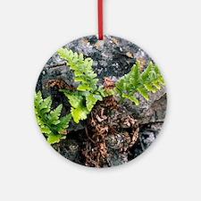 Fern (Asplenium adiantum-nigrum) Round Ornament