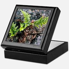 Fern (Asplenium adiantum-nigrum) Keepsake Box