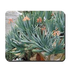 Fan aloe (Aloe plicatilis) Mousepad