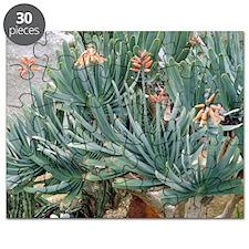 Fan aloe (Aloe plicatilis) Puzzle