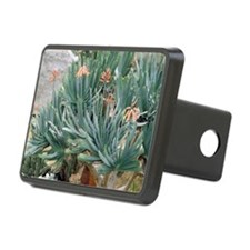 Fan aloe (Aloe plicatilis) Hitch Cover