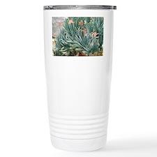Fan aloe (Aloe plicatilis) Travel Mug