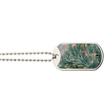 Fan aloe (Aloe plicatilis) Dog Tags