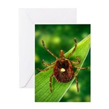 Female lone star tick Greeting Card