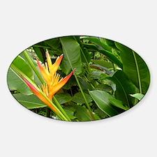 False bird-of-paradise (Heliconia s Decal