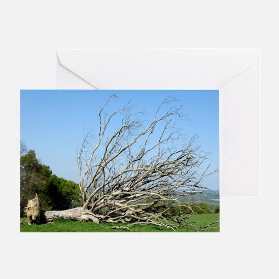 Fallen dead tree Greeting Card