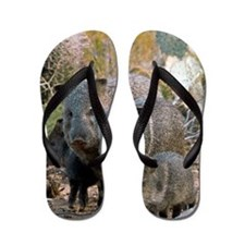 Family of Collared Peccaries Flip Flops