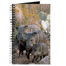 Family of Collared Peccaries Journal
