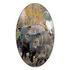 Family of Collared Peccaries Decal