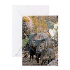 Family of Collared Peccaries Greeting Card