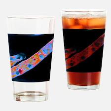 F/col TEM of Mycobacterium tubercul Drinking Glass