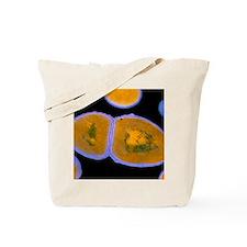 F/col TEM of Enterococcus faecalis Tote Bag