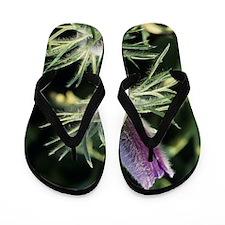 European pasque flower Flip Flops